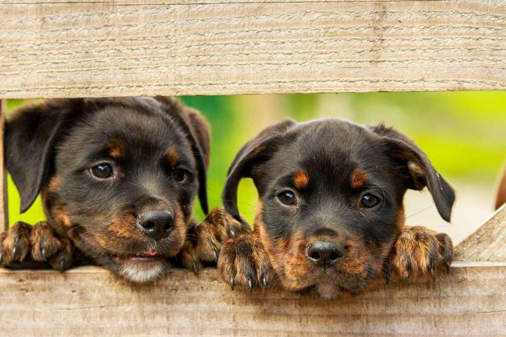 Штрафы за выгул собак рядом с домом