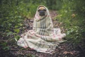 Выгул собак на придомовой территории МКД